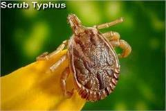 death of woman due to scrub typhus