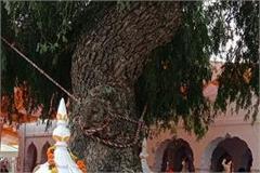 saka of 1921 reminds us of the tree jand