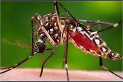 dengue stings people moaning running from hospital to hospital for treatment