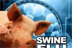 swine flu and malaria also spread in punjab