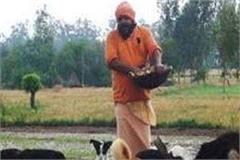 dogs are the owners of crores of land here seem to enjoy delicious cuisine