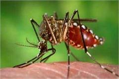 dengue outbreak 35 cases reported in the district under treatment