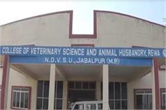 research kadaknath species farmers train rewa veterinary college