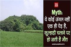 myth it is not a forest it is a single tree an ax leads to death