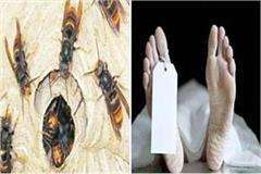 wild bee atttack on women death of one