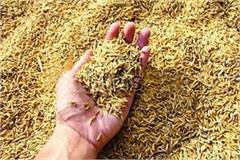 rice reached 118 86 lakh tonnes in state mandis yesterday