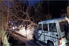 tree fall into road traffic jam