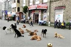 dog lovers gave application for adoption of street dogs