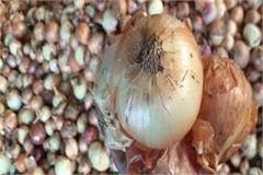 onion prices high