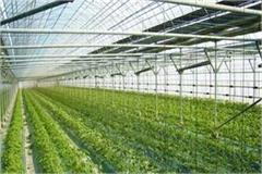 vegetable crop affected cold winter farmers resorted methods