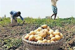 unseasonal rains and heavy rainfall in up potato mustard etc crops