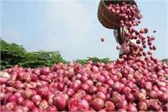 onion will be available at a price of 60 rupees in bhopal today