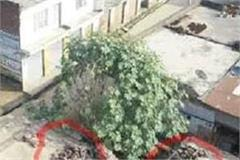 the miscreants had placed stones and bricks on the roofs