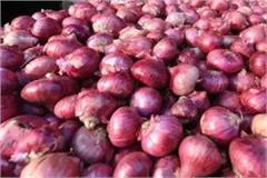 onion new year prices expected increase