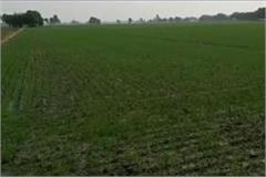 hail and hailstorm caused havoc farmers suffered heavy losses