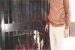 pitbull dog amritsar jail