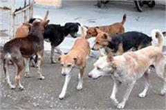 terrorist dogs stray city five people injured