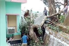 tree fall into irb battalion commandant