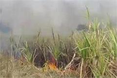 rashtriya lok dal workers burn sugarcane crop for not increasing prices