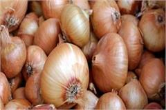 turkish onion reached in himachal