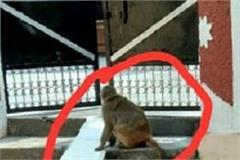 dreaded monkeys