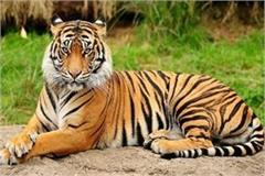 the forest departmen tiger hunters and smugglers arrested