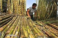 sugar mills should be paid to farmers