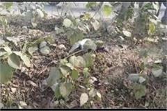 anupama jaiswal s close bjp leader s death