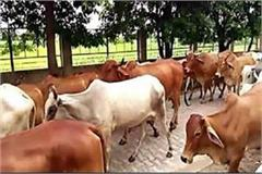 first gokul gram to be made in madhya pradesh