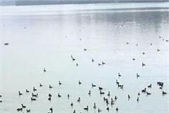 view of gobind sagar lake and river swan