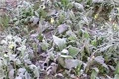 temperatures dropped in the plains fog increased the problem of farmers