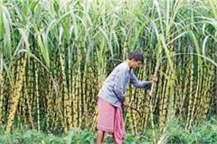sugarcane farmers worry even after lakhs of claims of government in deoria