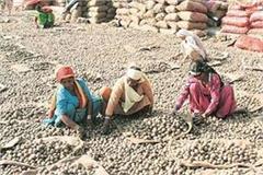potato farmers started sending money to pm modi