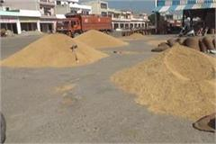 decrease of rs 300 per quintal in the grain market in paddy crop