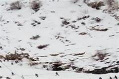 army jawan in kullu traped glacier