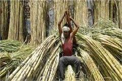 allahabad high court orders cane farmers pay dues in 2 months