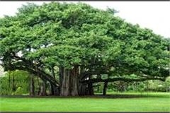 tree plants have important contribution in preventing pollution naik