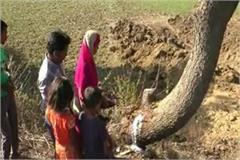the center of faith of the people coming out of the neem tree made of milk