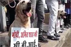 anti cbi protests by placing dog frames in the dog s throats ncp