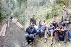 7 arrested on illegal felling bo and forest guard suspend