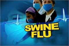 in mp death with swine flu  6 killed in 7 days