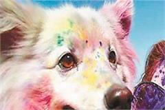 holi colors do not fall on pet