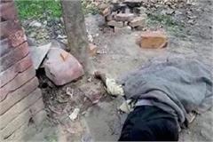 chowkidar killed in dogs attack in yamunanagar