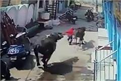 can not kill zako rakheya sayiya see video