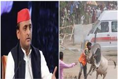 akhilesh targets bjp government over stray cattle
