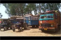 arrival of wheat from up not stopping five vehicles caught
