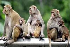monkeys attack on woman
