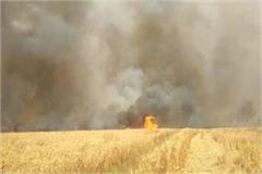 fierce fire in wheat crop fields in many areas of haryana