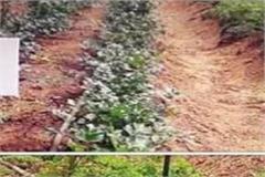 himachal of soil