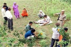 opium farming busted in nalagarh